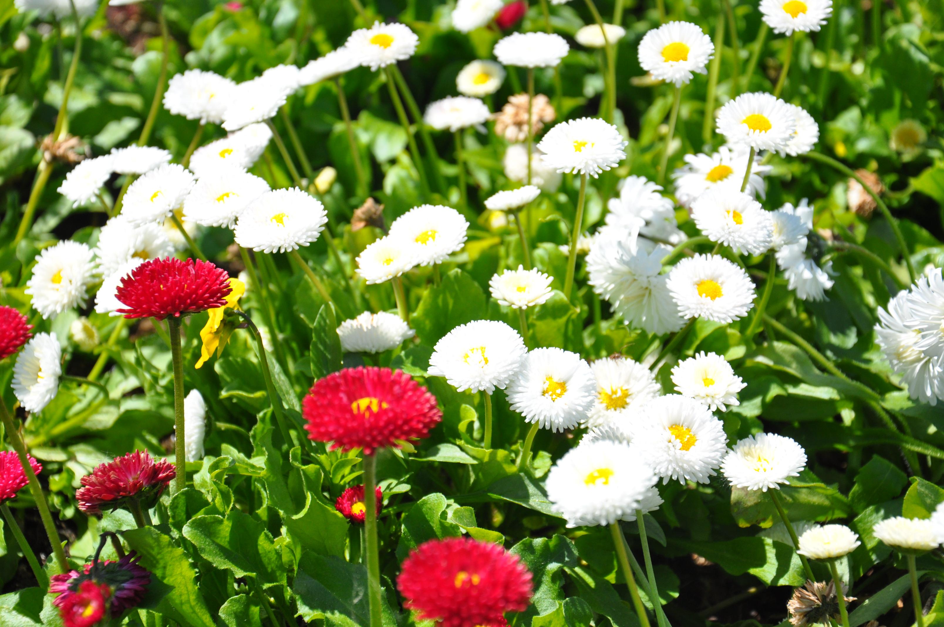 blütenmeer-park-der-gärten