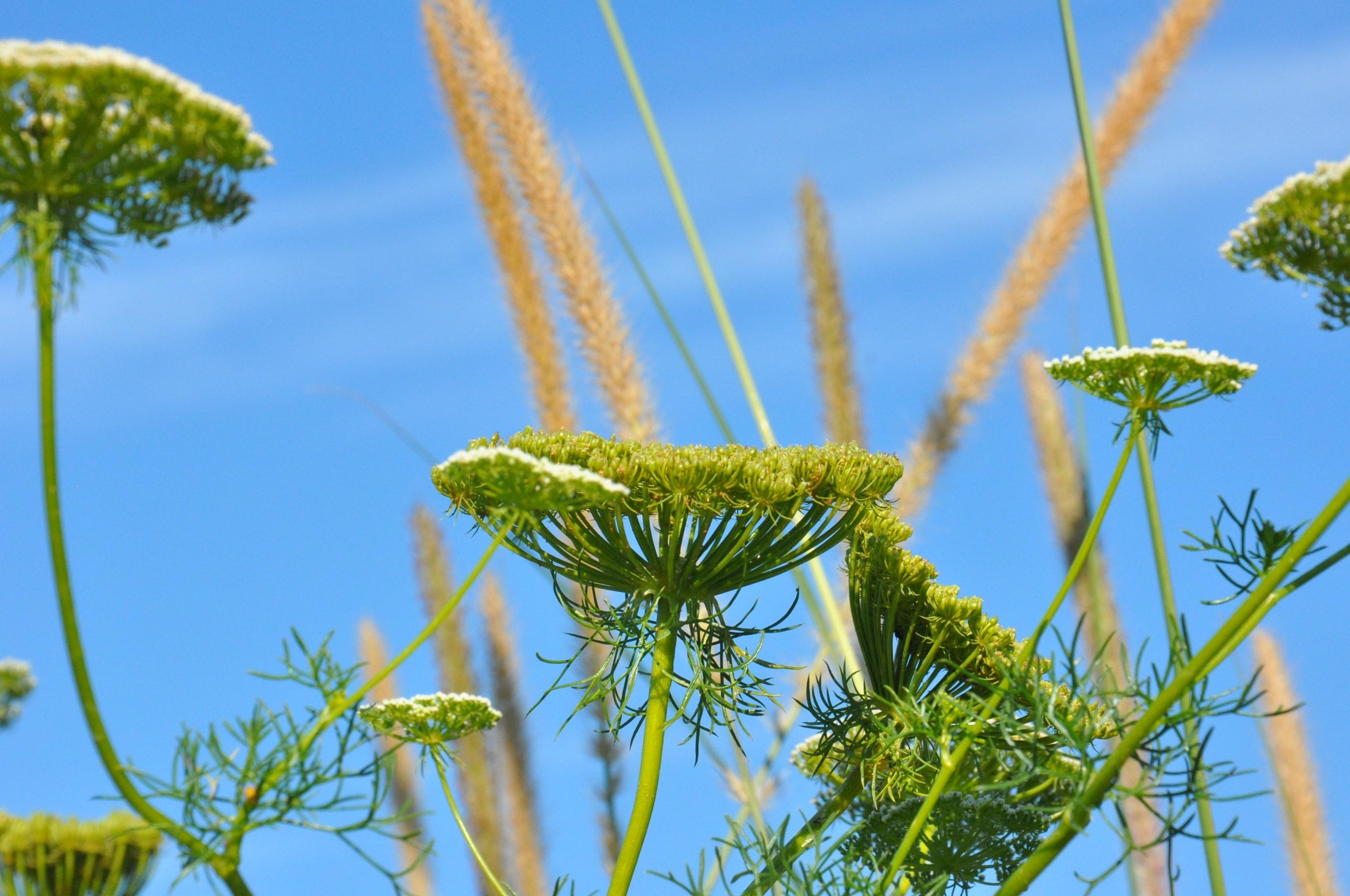 gräser-park-der-gärten