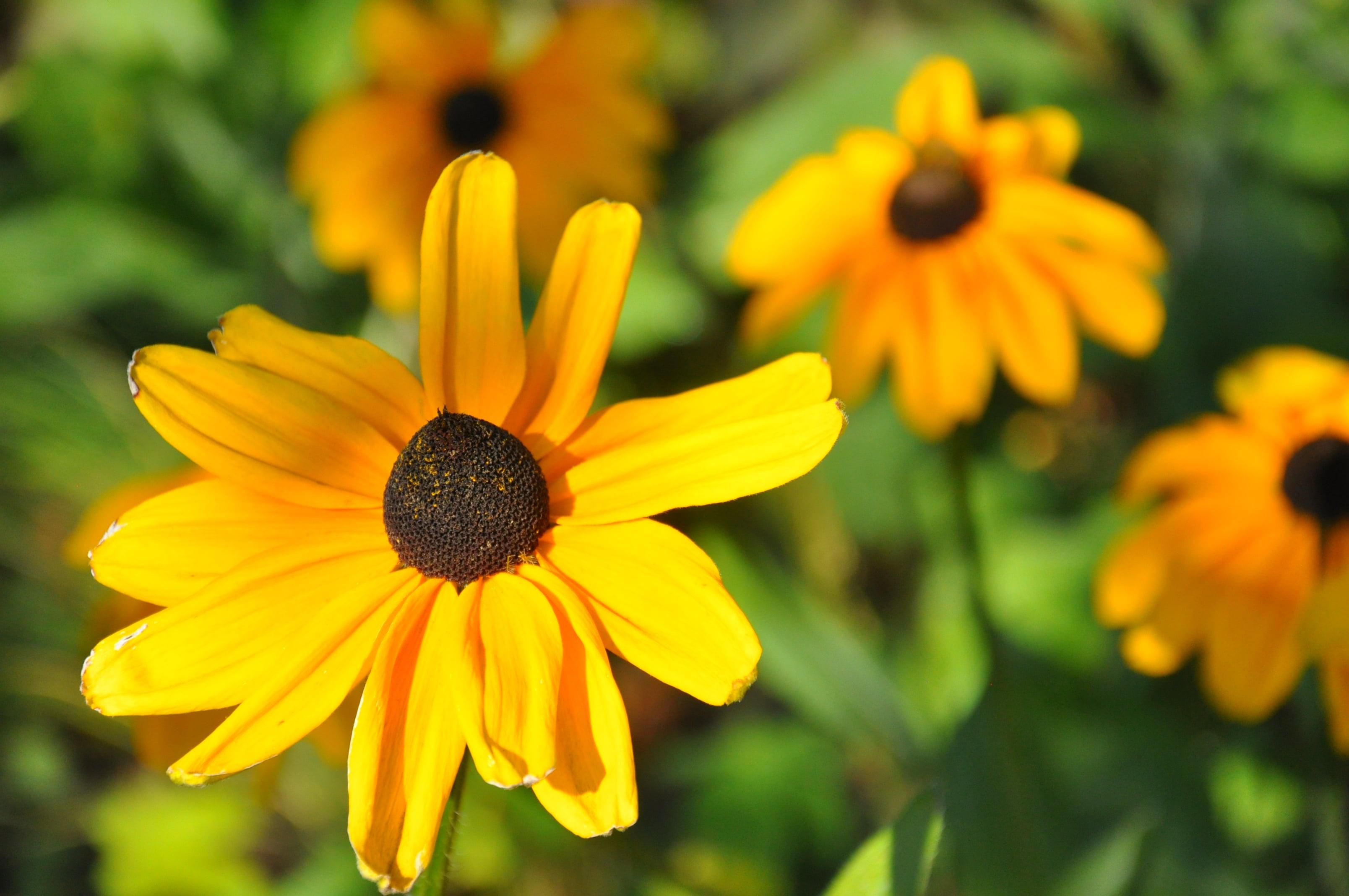 ausflugsziel herbstblume